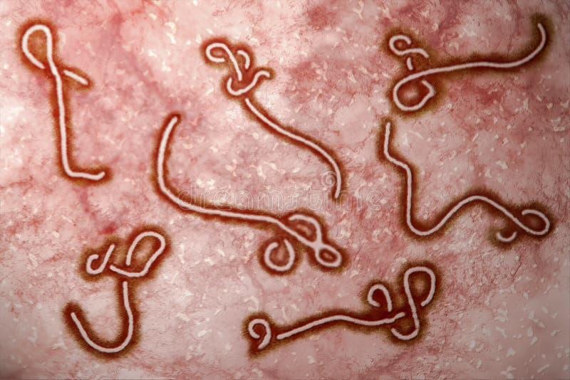 Вирус Ebola иллюстрация штока