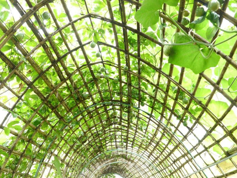 висеть сада стоковые изображения rf