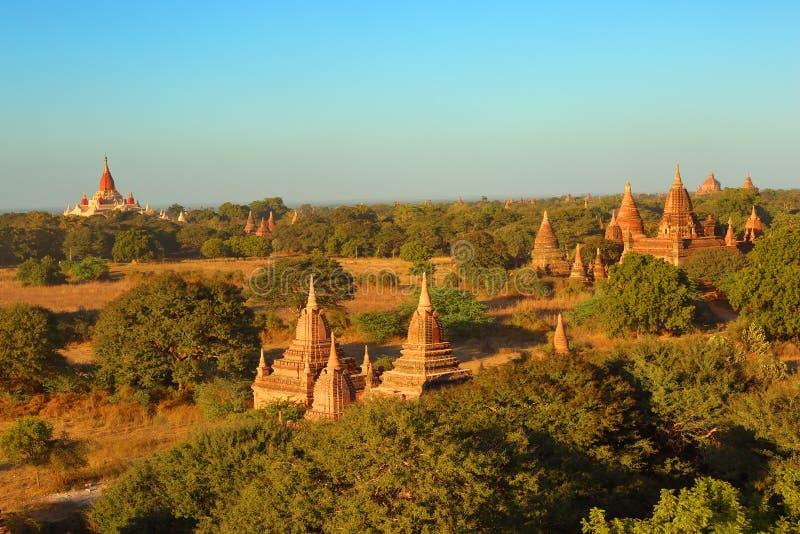 Виски в Bagan на заходе солнца, Мьянме стоковые фотографии rf