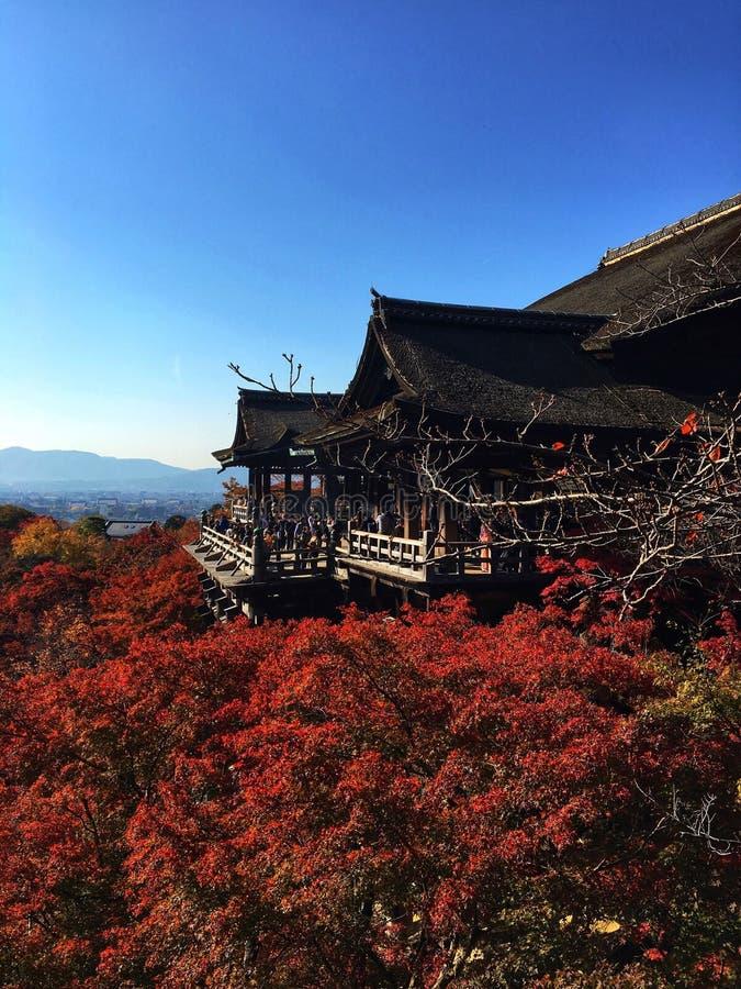 Висок в Киото с кленовым листом стоковое изображение