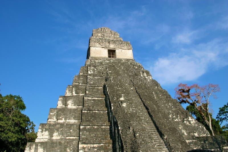 висок Гватемалы майяский tikal стоковое изображение rf