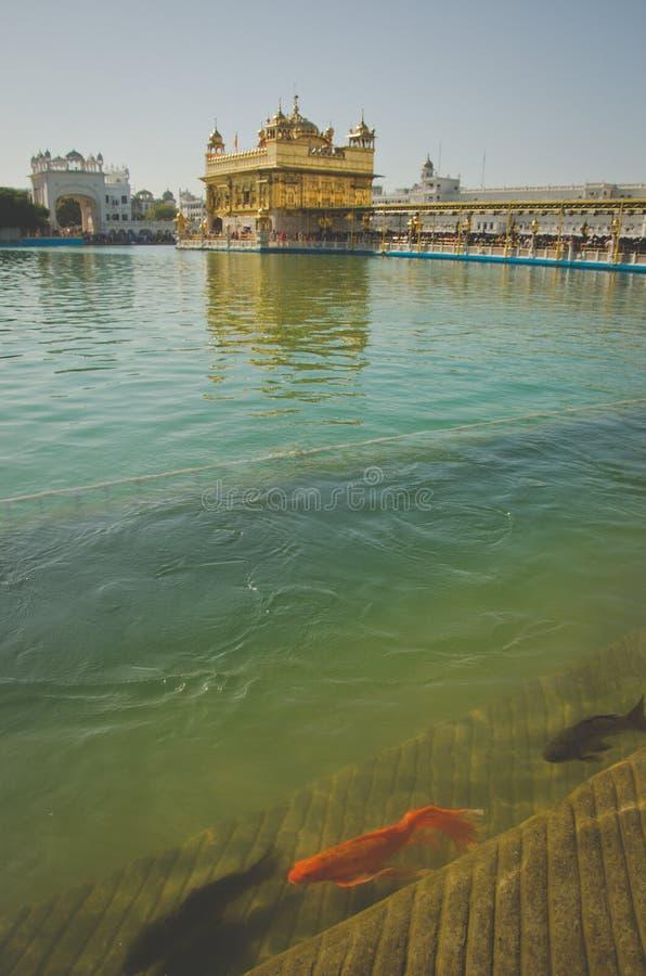 висок amritsar золотистый стоковое фото