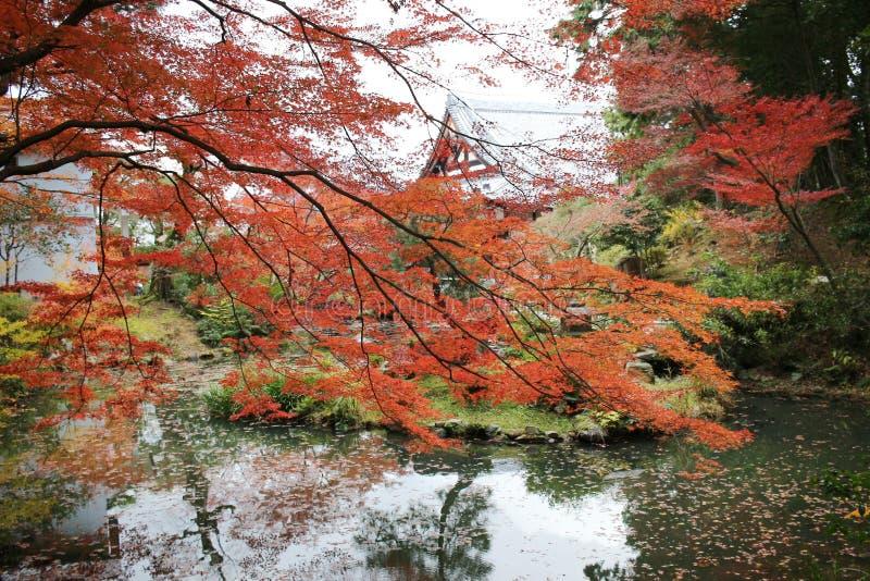 Висок Konkai Komyoji сада Дзэн Autam стоковые изображения