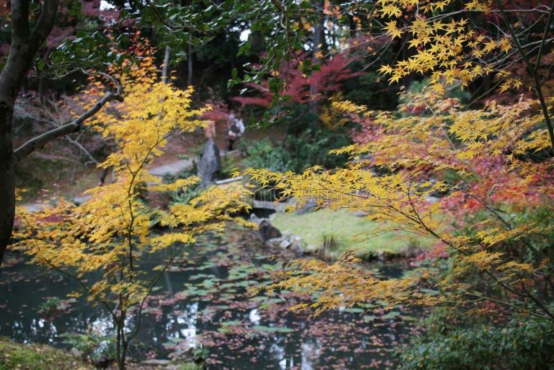 Висок Konkai Komyoji сада Дзэн Autam стоковые изображения rf