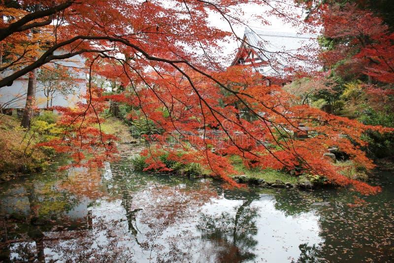 Висок Konkai Komyoji сада Дзэн Autam стоковое изображение rf
