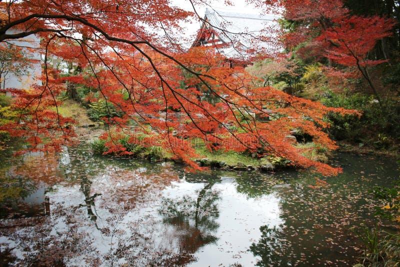 Висок Konkai Komyoji сада Дзэн Autam стоковая фотография rf