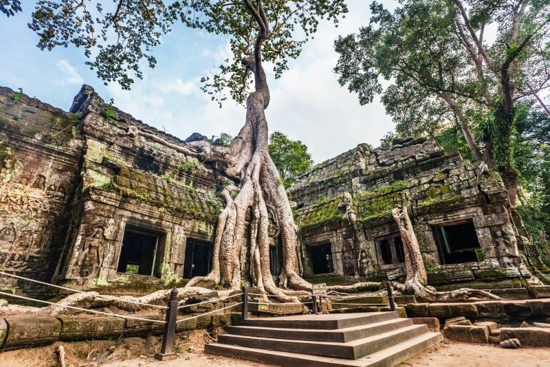 висок ta prohm Камбоджи angkor стоковые изображения