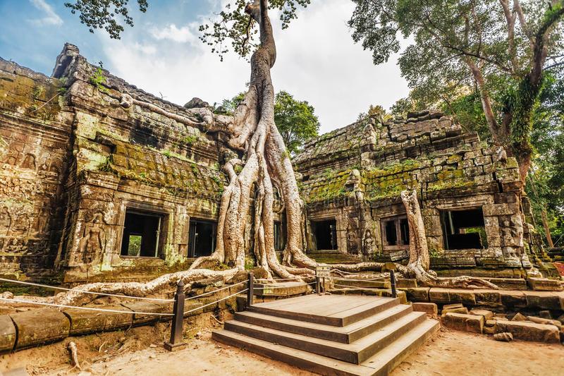 висок ta prohm Камбоджи angkor стоковое фото rf