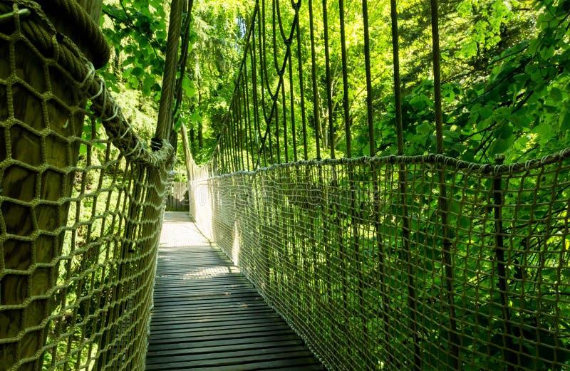 Висячий мост веревочки стоковые фото