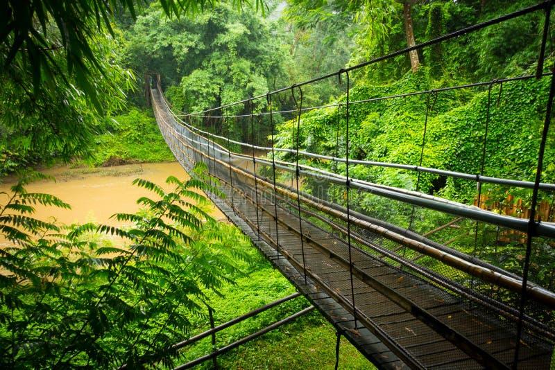 Висячий мост в джунглях около Чиангмая стоковое изображение