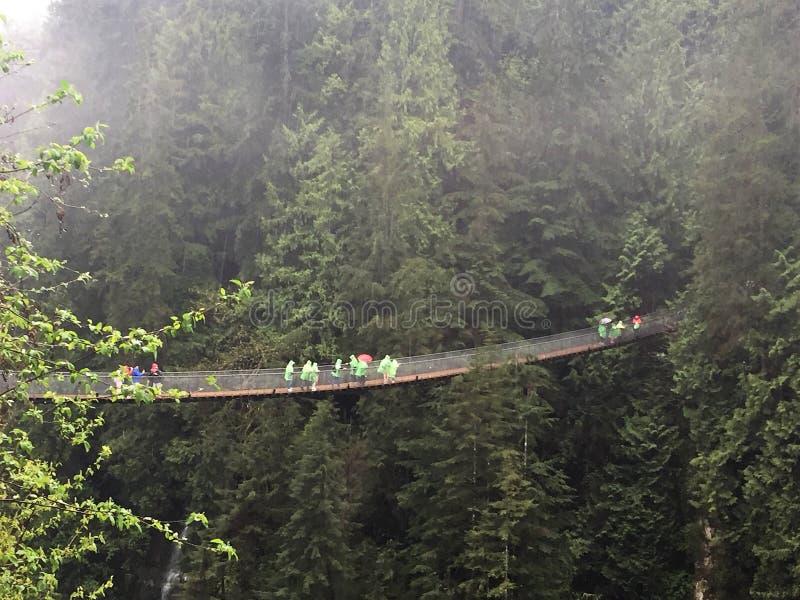 Висячий мост среди деревьев, Ванкувер Capilano, Канада стоковые изображения rf