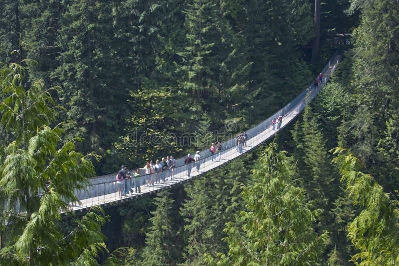 Висячий мост Capilano, Ванкувер, Британская Колумбия стоковое фото rf