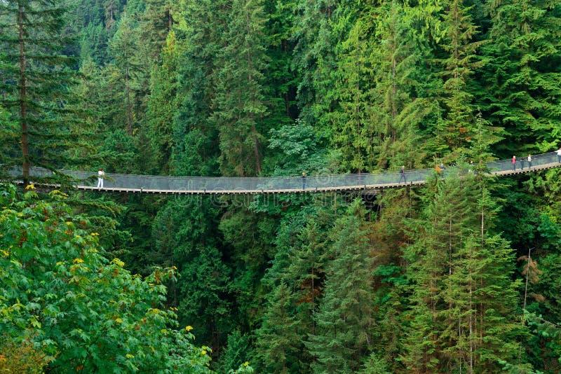 Висячий мост Capilano стоковое изображение