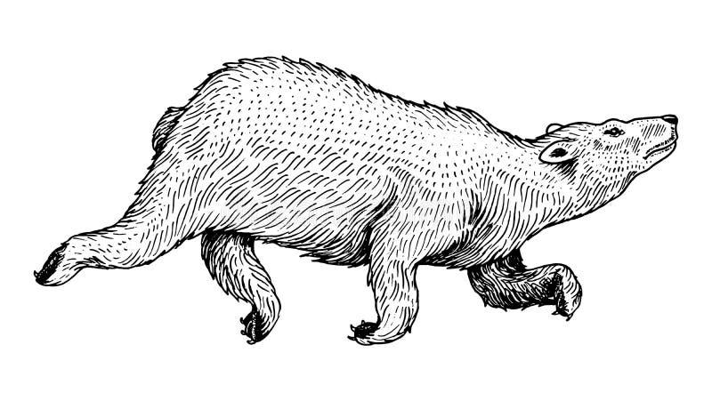 Витая полярный медведь Дикий ледовитый белый скакать животного Monochrome винтажный стиль Выгравированный эскиз руки вычерченный  иллюстрация вектора