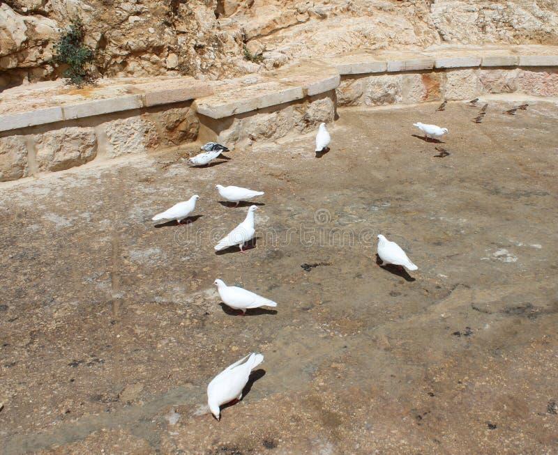 вихруны белые Повредите монастырь Saba, Лаура нашего ег святейшества Sabbas стоковое фото