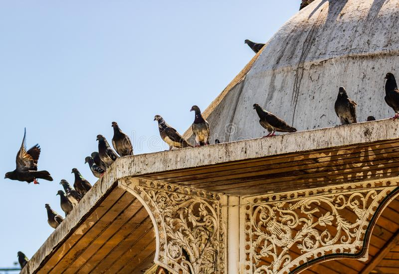 вихруны Стадо голубей на строя крыше стоковое изображение rf