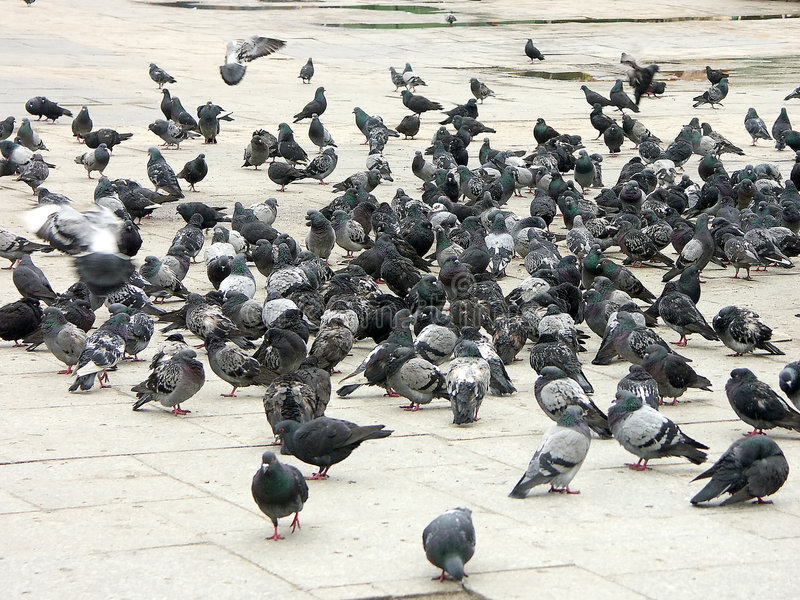 Download вихруны стоковое изображение. изображение насчитывающей города - 480383