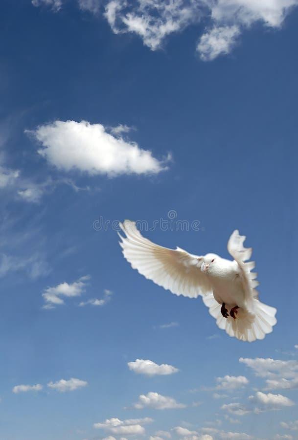 вихрун летания стоковое фото