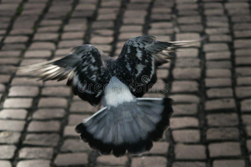 вихрун полета стоковая фотография