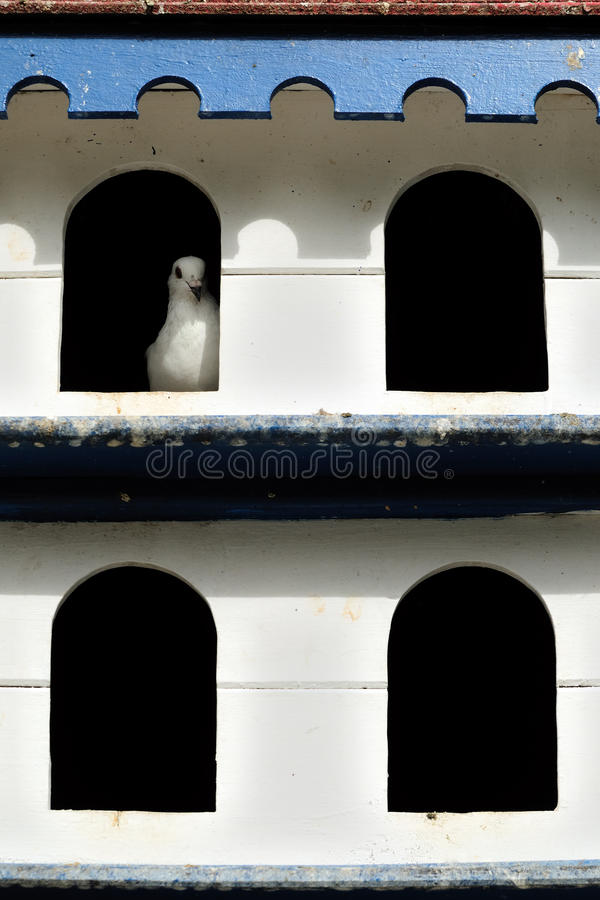 вихрун varadero дома стоковые изображения rf