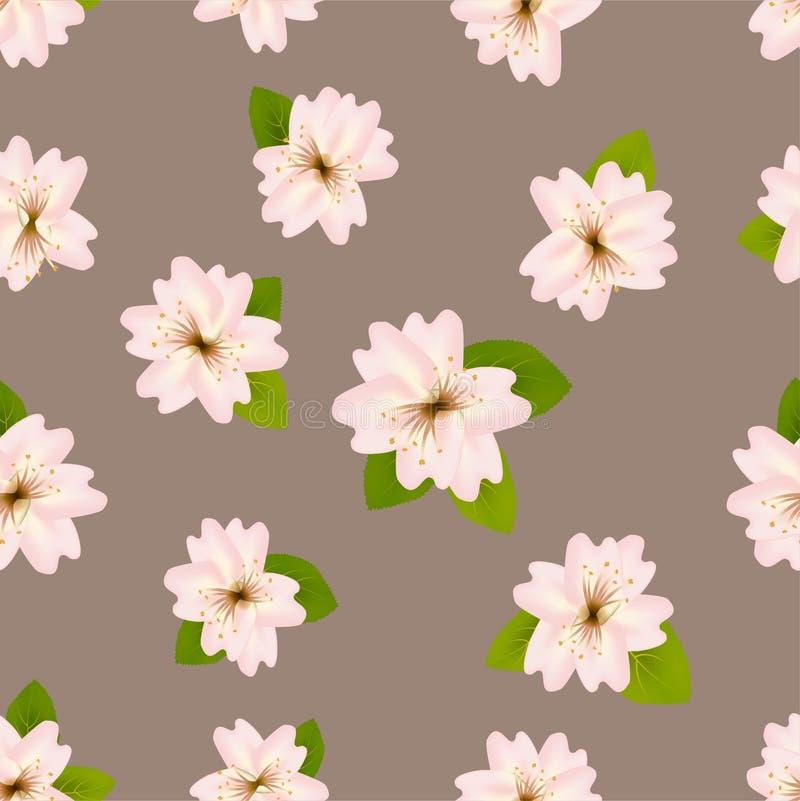 Вишневые цвета весны Безшовная картина с японцем Сакурой Розовые цветки на серой бежевой предпосылке Романтичная иллюстрация вект иллюстрация вектора