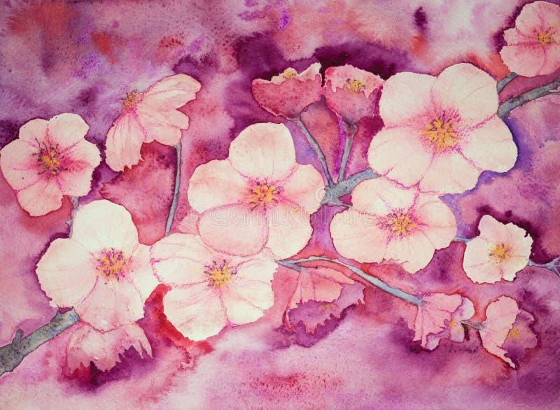 Вишневые цвета в теплых розоватых цветах иллюстрация штока