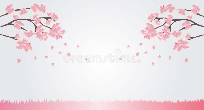 Вишневые цвета естественной предпосылки розовые зацветают и дунутый прочь с ветерком предпосылки для adverti текста или дисплея р иллюстрация штока