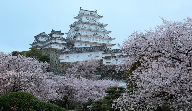 Вишневые цвета и главная башня места всемирного наследия ЮНЕСКО стоковое фото