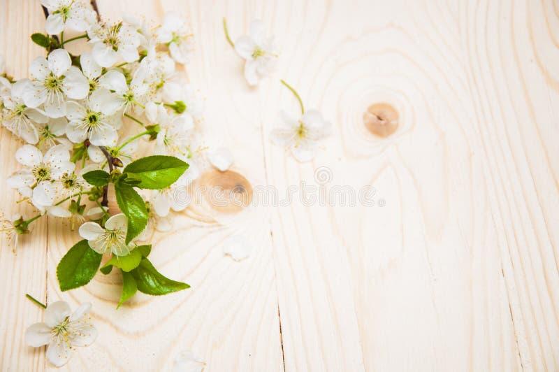 Вишневый цветок стоковое фото rf