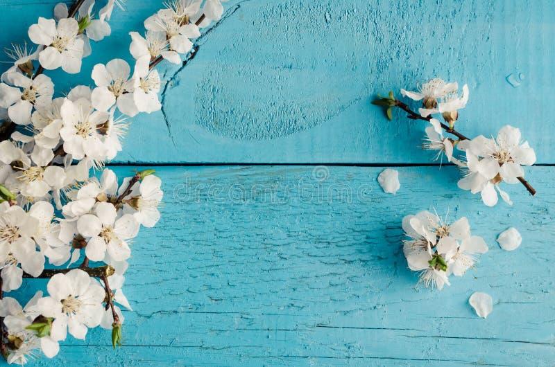 Вишневый цвет весны на деревенской деревянной предпосылке стоковые изображения