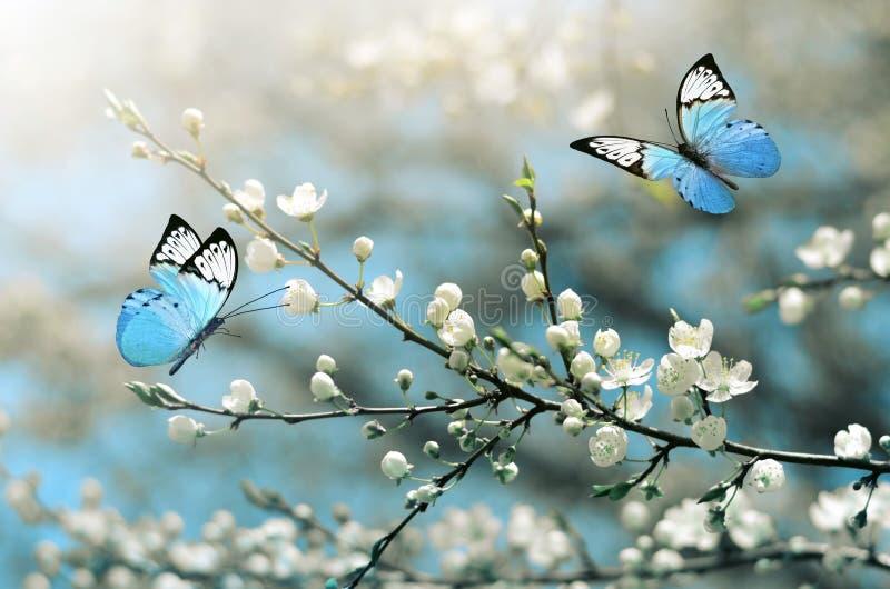 Вишневый цвет в одичалом и бабочке Весеннее время стоковые изображения