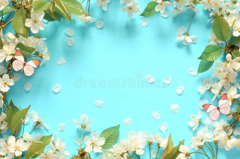 Вишневый цвет в одичалом и бабочке стоковые изображения rf