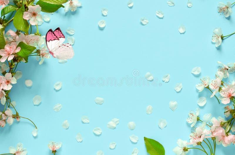 Вишневый цвет в одичалом и бабочке стоковые фото