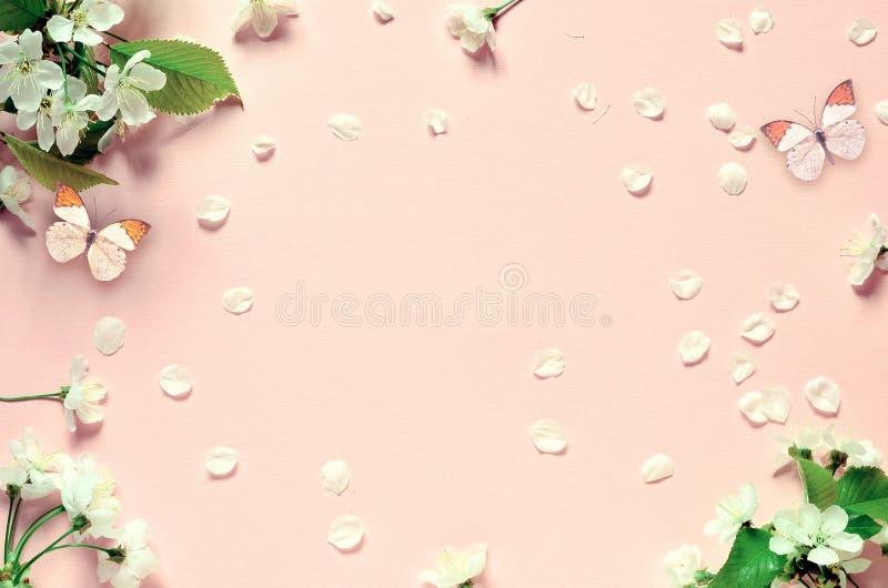 Вишневый цвет в одичалом и бабочке стоковая фотография