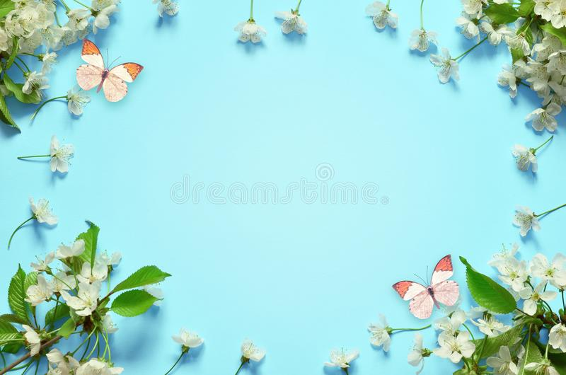 Вишневый цвет в одичалом и бабочке стоковые изображения