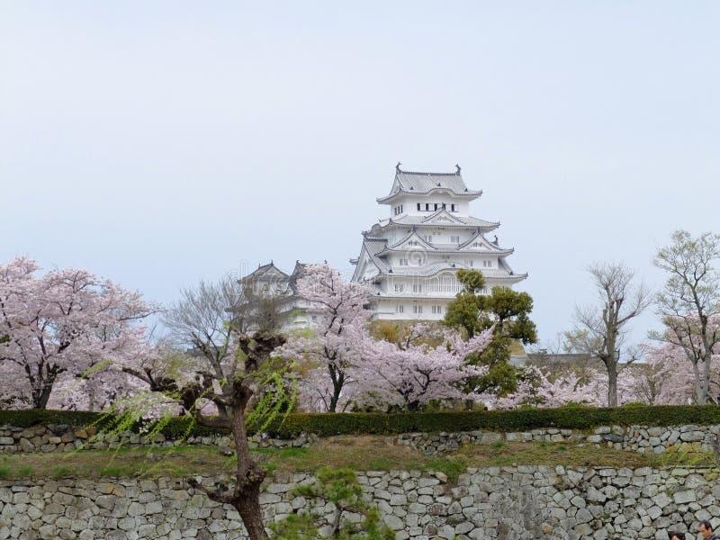 вишневый цвет замка Himeji стоковая фотография