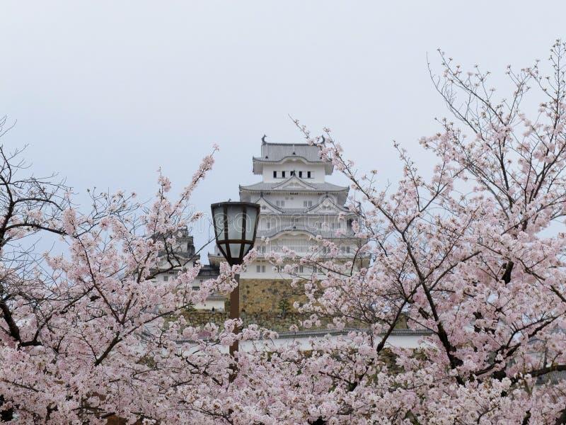вишневый цвет замка Himeji стоковое фото