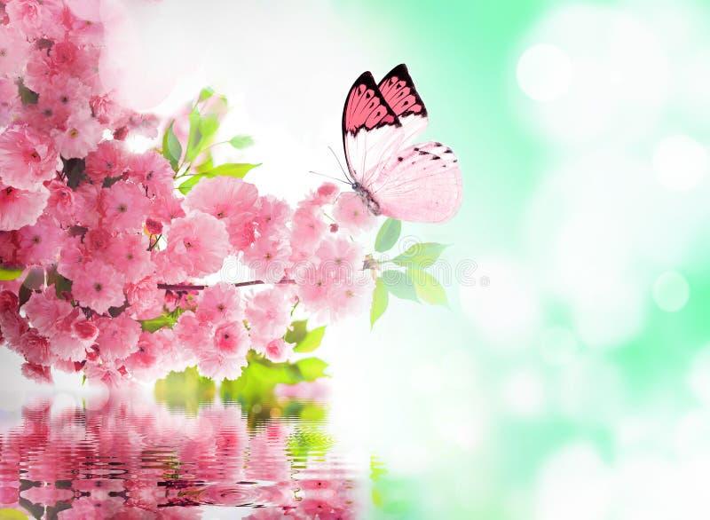 Вишневый цвет и бабочка стоковое изображение