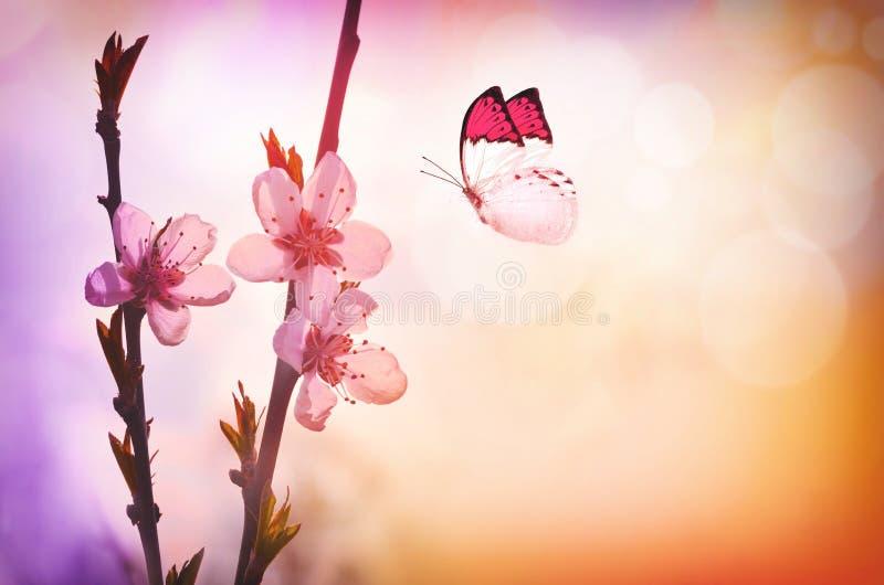 Вишневый цвет и бабочка стоковые изображения rf