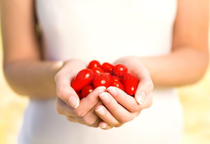 вишня вручает томаты удерживания стоковые фотографии rf