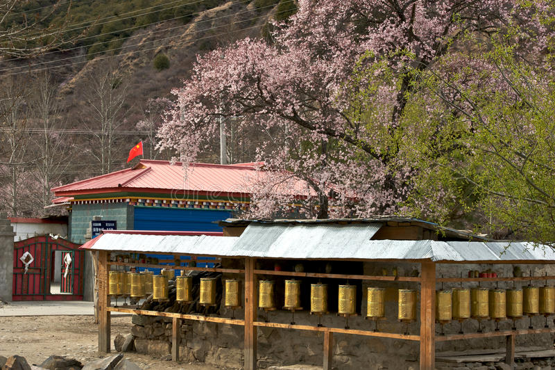 Вишня зацветая, Nyingchi, Тибет стоковая фотография