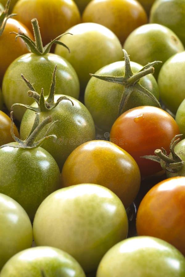 вишня несколько томатов стоковые изображения