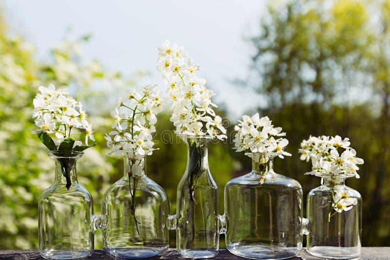Вишня птицы цветков в вазе на предпосылке ландшафта весны стоковая фотография