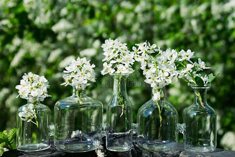 Вишня птицы цветков в вазе на предпосылке ландшафта весны стоковые изображения