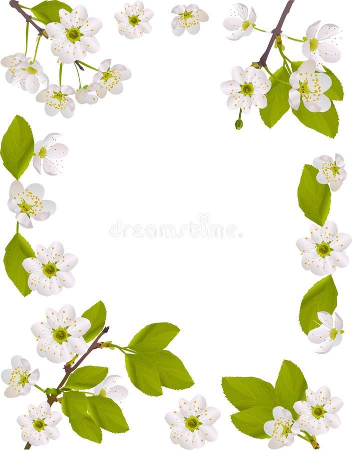 Download вишня цветет белизна иллюстрации рамки Иллюстрация вектора - иллюстрации насчитывающей конструкция, картина: 18393545