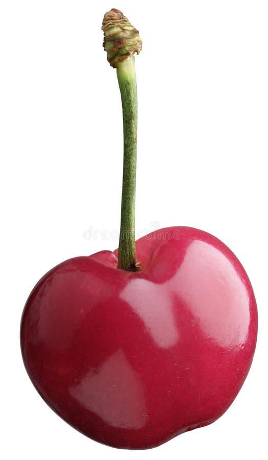 вишня стоковое изображение