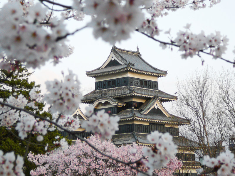 вишня matsumoto sakura замока цветения стоковое изображение