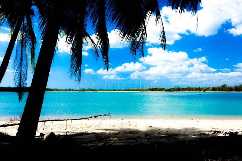 Вид на море с кокосовой пальмой стоковые фото