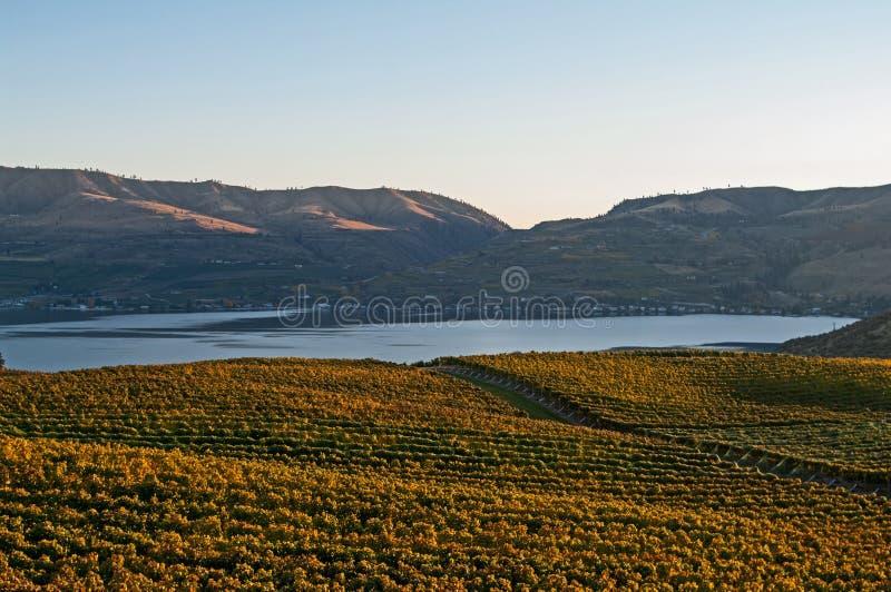 Вид на озеро Chelan от виноградника Benson на заходе солнца стоковое фото rf