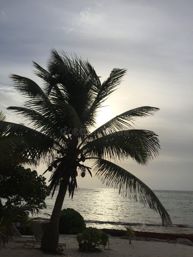Вид на океан утра стоковые изображения rf